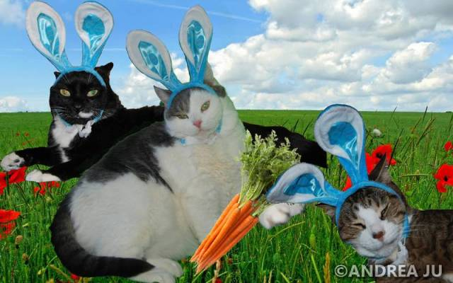 tn_Easter Cats