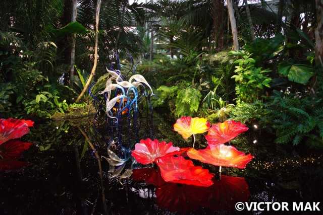 Chihuly Nights At Ny Botanical Garden Jebus Mews Andrea