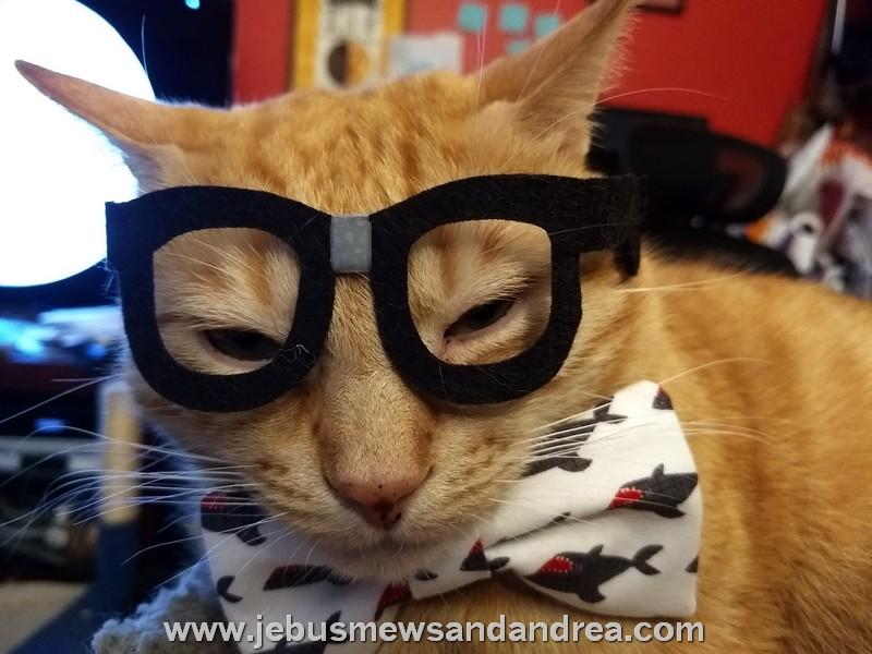 Cat in Costume & Cat in Costume u2013 Jebus Mews u0026 Andrea